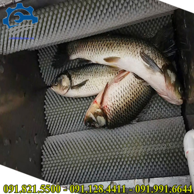 máy đánh vẩy cá công nghiệp